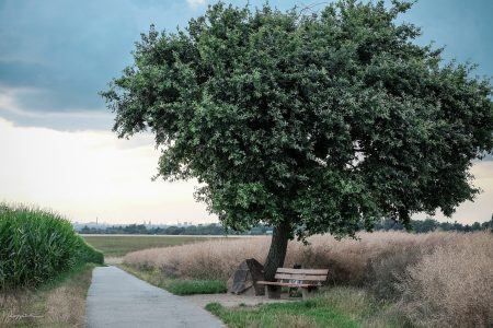 Der einsame Baum